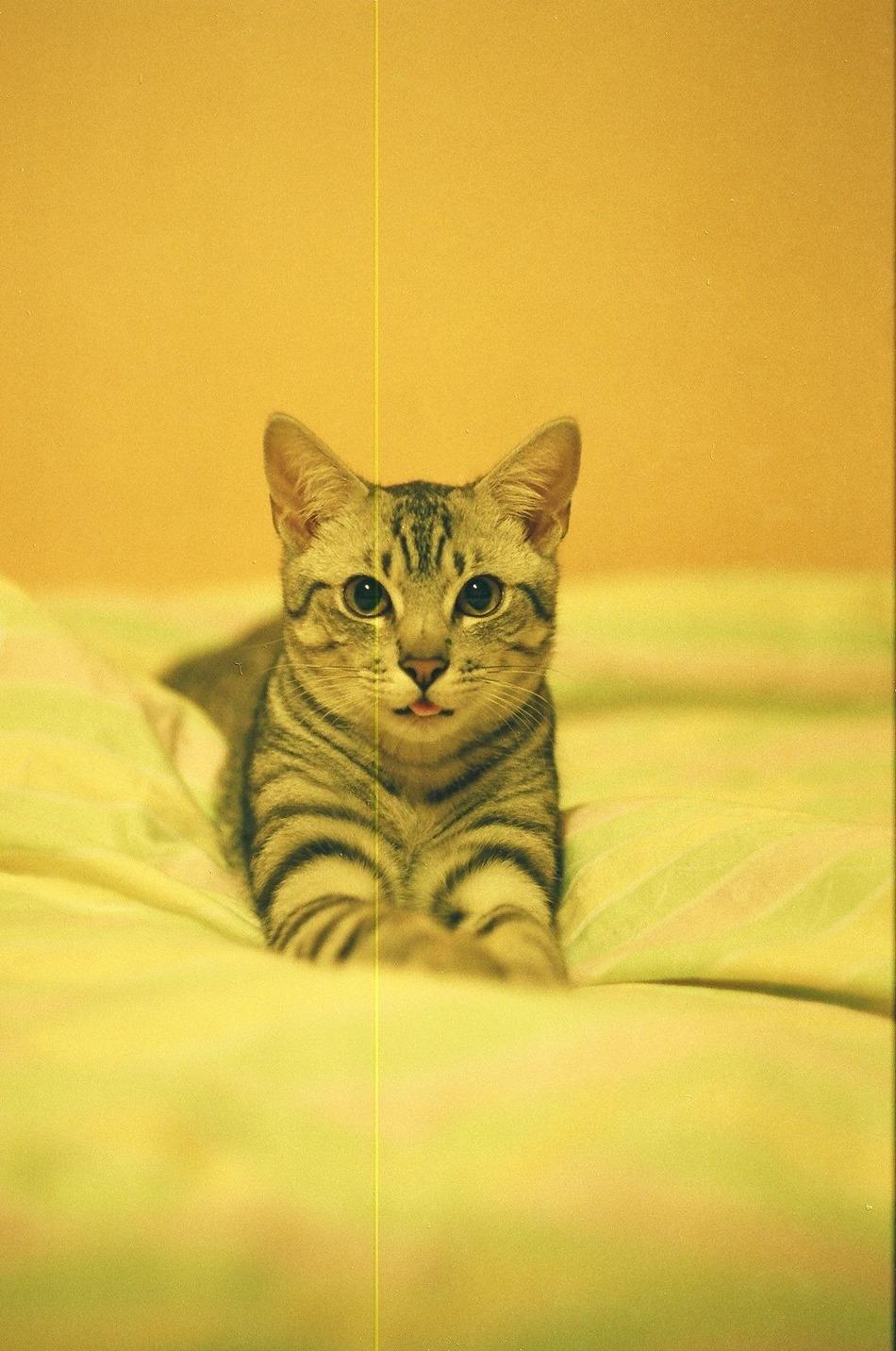 mój kot Nietzsche